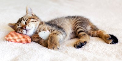 Sick cat